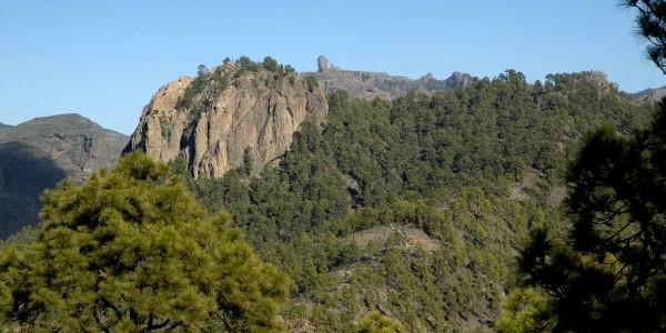 slider-jornadas-forestales-0