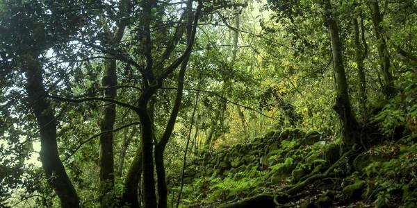 slider-jornadas-forestales-6