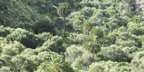 XII Jornadas Forestales (9)